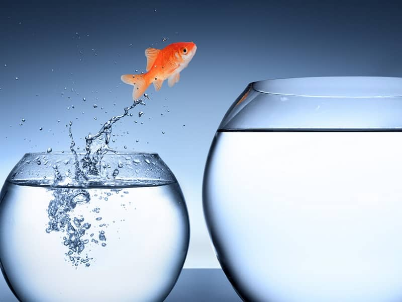 goldfish jumping one bowl to another